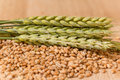 Wheat Spikelet Stock Image - 54950921