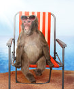 Monkey Relaxing On A Beach Chair Royalty Free Stock Photography - 54971357