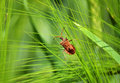 The Insect On The Plant Stock Photography - 54978652
