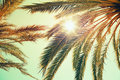 Palm Trees And Shining Sun Over Bright Sky Royalty Free Stock Image - 54990326
