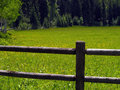 Fence And Field Of Yellow Wildflowers Stock Photography - 5505112