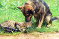 Dog And Cat Best Friends Royalty Free Stock Photography - 55013037