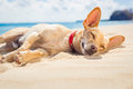 Relaxing Dog On The Beach Stock Image - 55065331