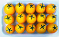 Yellow Tomatoes In A Container Stock Photo - 55141060