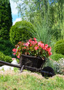 Red Flowers In The Garden On A Small Decorative Wooden Wagon Stock Photography - 55142242