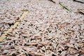 Planty Of Little Anchovy Fish Drying On Open Air Stock Photos - 55195483