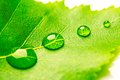 Water Drop On Leaf Stock Images - 55207714