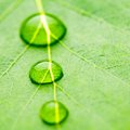 Water Drop On Leaf Royalty Free Stock Photo - 55207735