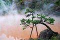 Bonzai Trees And Hot Spring Royalty Free Stock Image - 55243956