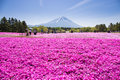 NASHIYAMA, JAPAN- 11 MAY. 2015: People From Tokyo And Other Cities Or Internatoinal Come To Mt. Fuji And Enjoy The Cherry Blossom Stock Photography - 55276622