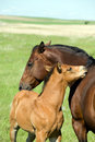 Mare And Foal Stock Photo - 5533780