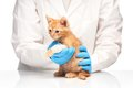 Little Ginger Kitten With Leg In Bandage At Veterinarian Royalty Free Stock Image - 55309406