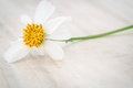 Close Up Grass Flower On Wood Table Royalty Free Stock Image - 55322236