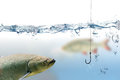 Fishing Hook Under Water And Trout Fish Stock Photography - 55345762