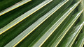 Coconut Leaves And Tree In Tropical Park Royalty Free Stock Image - 55359066