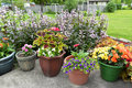 Patio Full Of Potted Plants. Royalty Free Stock Photo - 55385495