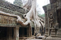 Tree Roots Overwhelm Ancient Temple Royalty Free Stock Photos - 55387528