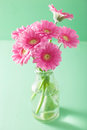 Beautiful Pink Gerbera Flowers Bouquet In Vase Royalty Free Stock Photography - 55408857