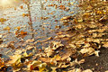 Fallen Autumn Leaves In Water Stock Photography - 55420742