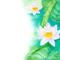 Watercolor Water Lillies Background Royalty Free Stock Photos - 55455158
