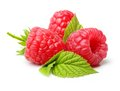 Red Berry Raspberry Isolated Stock Photography - 55474762