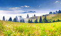 Beautiful Summer Landscape In The Mountains Royalty Free Stock Photos - 55493098