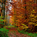 Forest Background In Autumn 03 Royalty Free Stock Photography - 5551297
