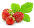 Red Strawberry Fruits With Green Leafs Isolated Royalty Free Stock Photos - 5553018