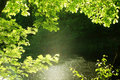 Natural Frame Forest Royalty Free Stock Photography - 5553227
