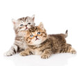 Two British Kittens Looking Up. Isolated On White Background Royalty Free Stock Images - 55537879