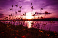 Sunset River Color Purple Royalty Free Stock Image - 55582736