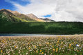 Prairie Full Of Flowers ,High Mountain And Lake Cuopu Stock Images - 55593664