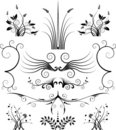 Floral Symmetry Royalty Free Stock Photography - 5567227
