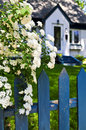 Blue Fence With White Flowers Stock Photography - 5569752