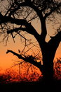 Sunset In Sabi Sands Stock Image - 5569911