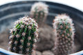 Cactus Plants Stock Photos - 55709993