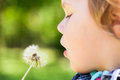 Caucasian Blond Baby Girl And Dandelion Flowe Stock Photo - 55716440