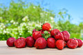 Sweet Strawberry In Garden Royalty Free Stock Images - 55723599
