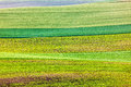 Abstract Pattern Of Rolling Fields Royalty Free Stock Photo - 55744435