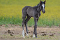 Foal Stock Images - 55747794
