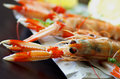 Langoustines Stock Photos - 55758983