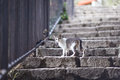 Cat Walking At Stone Staircase Stock Image - 55801901