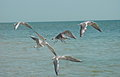 Gulls Fly Above A Sea Stock Photo - 55828840