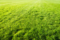Green Grass Field Background, Texture, Pattern Stock Photography - 55868512