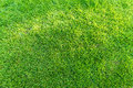 Green Grass Field Background, Texture, Pattern Royalty Free Stock Image - 55868566
