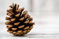 Pine Cones Royalty Free Stock Images - 55869079