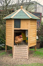 Chicken Coop Stock Image - 55946051