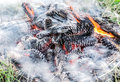 Nice View Of Burning Pine Cones In Smoke And Fire Stock Images - 55956994