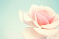 Sweet Pink Rose In Soft Color And Blur Style Stock Photography - 55969302