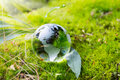 Globe Resting On Moss In A Forest. Royalty Free Stock Photography - 55975827